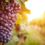 grapes 2 universal